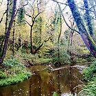 Forge Valley Hackness - North Yorkshire by Merice  Ewart-Marshall - LFA
