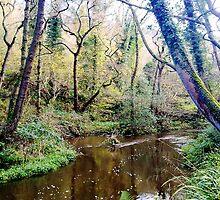 Forge Valley Hackness - North Yorkshire by Merice Ewart Marshall - LFA
