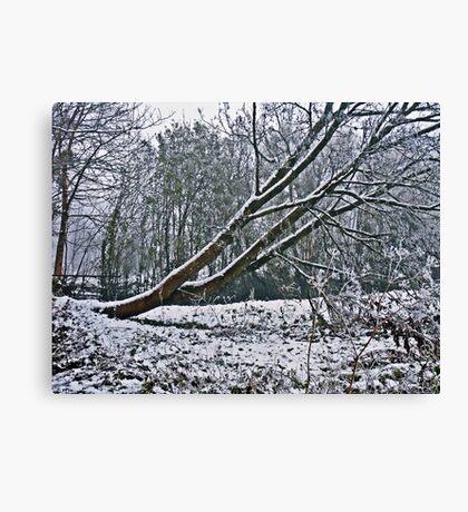 The Coldest Winter #4 Canvas Print