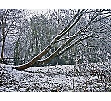 The Coldest Winter #4 Photographic Print