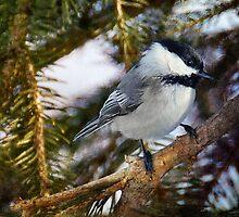 Winter Chickadee by Elaine  Manley