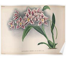 Iconagraphy of Orchids Iconographie des Orchidées Jean Jules Linden V15 1899 0150 Poster