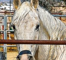Horse Portrait - Sketch Effect by Doug Greenwald