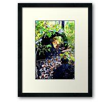 Log On Bibbulmun Track Framed Print
