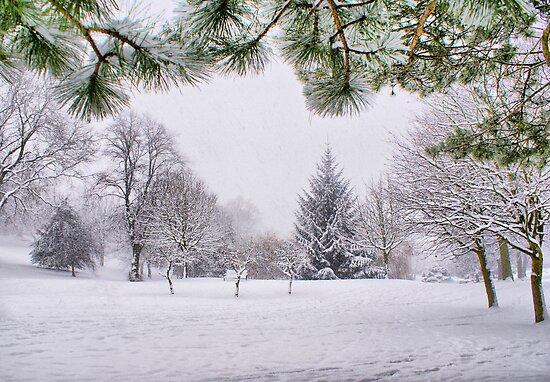 White And Wintery At Peel Park, Bradford by Sandra Cockayne