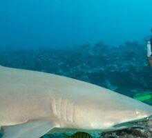 Shark Watching Sticker