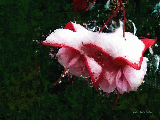Nature's Ornament by RC deWinter