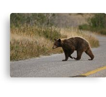 Not everyone follows the highway code... Canvas Print