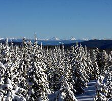 Winter wonderland in Montana  by amontanaview