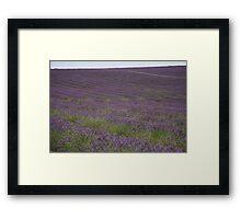 Lavender Horizon Framed Print