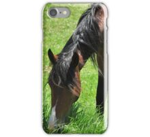 Horse eating Grass iPhone Case/Skin