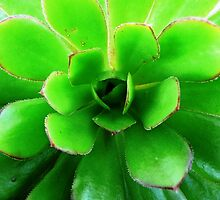 Green succulent by Janette Anderson