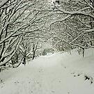 Winter Woodland by Mel Preston