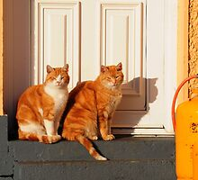 Animals in Ireland by Karin  Funke