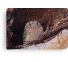 Sleeping Owl Canvas Print