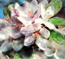 Apple Blossoms by Eric Tuominen