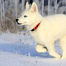 Dashing through the snow... by whisperjo