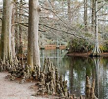 Winter Cypress Trees by Widcat