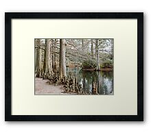 Winter Cypress Trees Framed Print