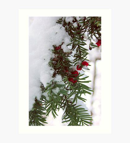 Snowy Berries Art Print