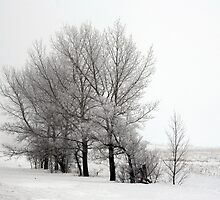 frosted trees by axieflics