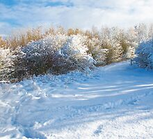 Winter wonderland where I live in the Meadows  by Elaine123
