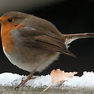 robin it sure is cold out!!! by Grandalf