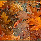 autumn leaves by alex skelly