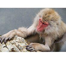 Monkey Onsen Photographic Print