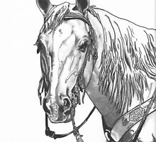 Inspiration-Sonny a Registered Palomino by Jennifer  Vaughn