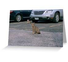 Yard Cats Greeting Card