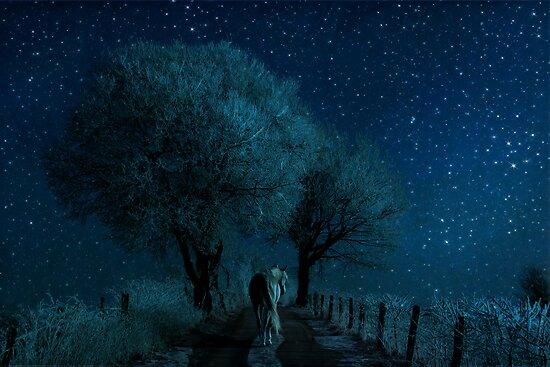 Solo by Aimee Stewart