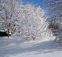 Glistening Trees ^ by ctheworld