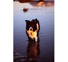 Indy on Shell Island Photographic Print