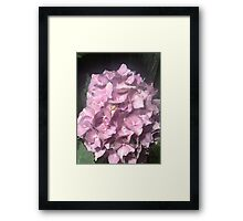 Yahm Hydrangea- Almost Raw Framed Print