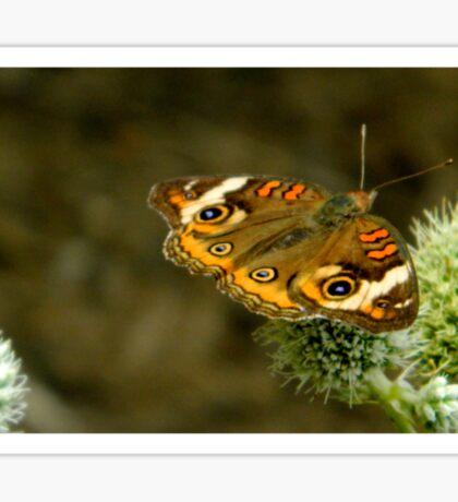 Butterfly Garden Guest     ^ Sticker
