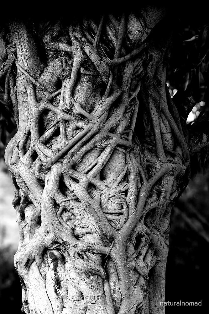 Stranglehold  by naturalnomad