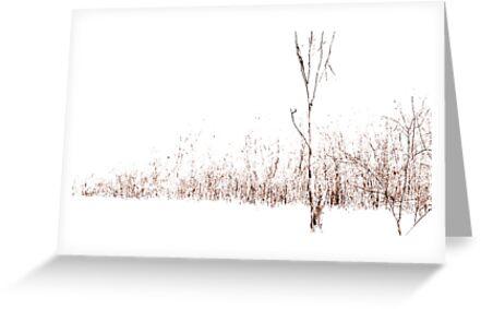 White Fall by Bobbie Bonebrake