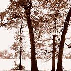 Sunny Fall by Bobbie J. Bonebrake