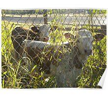 Pasture Pals-Palmhurst,TX Poster