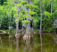 Cypress Paradise by algill