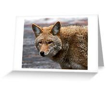 Yosemite Coyote Greeting Card