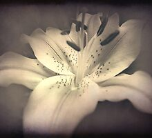 The Softer Side Of Lily by Rozalia Toth