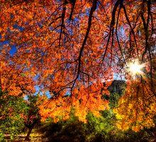 Shades of Autumn by Saija  Lehtonen