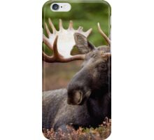 Funky Moose iPhone Case/Skin