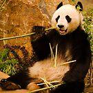 Wang Wang the panda eating bamboo by Elana Bailey