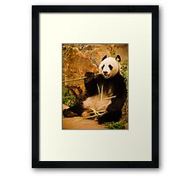 Wang Wang the panda eating bamboo Framed Print