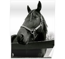 Equine Beauty Poster