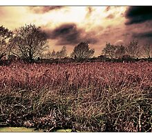 The Lee Valley - (Cheshunt) by MoGeoPhoto