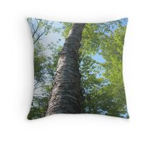 Old Birch on the Island Throw Pillow